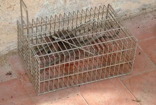 Matera capitale…. dei topi. Ma dall'Asm nessuna risposta