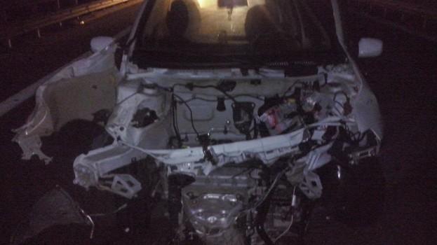 Incidente provocato da un cinghiale sulla statale 99 Matera-Altamura